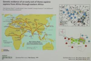 Reconstruction des migrations d'Homo sapiens (© Lluis Quintana-Murci, Collège de France)