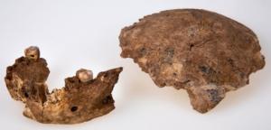 Restes de Homo Nesher Ramla (d'après https://www.bbc.com/news/science-environment-57586315)